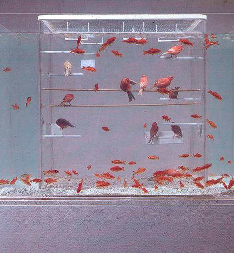 Birdsfishes