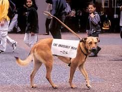 Invisible_man_dog